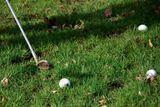 trenink golfu