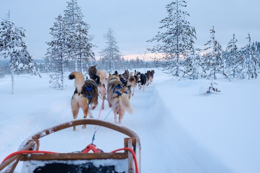 Den s aljašskými husky