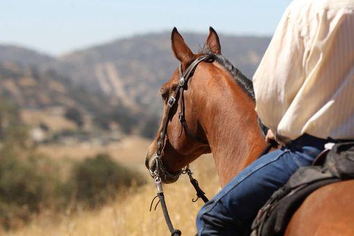 Jeden den u koní